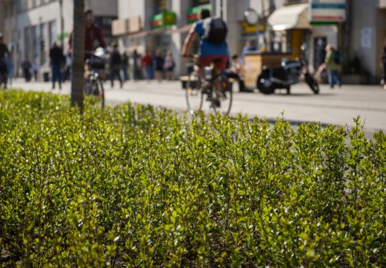 Posadzimy nową zieleń przy ulicach